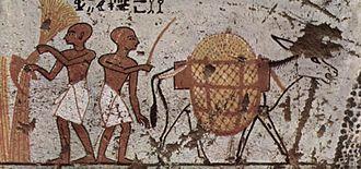 Agricultura en el Antiguo Egipto