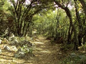 Camino que lleva hasta la Cueva Remigia
