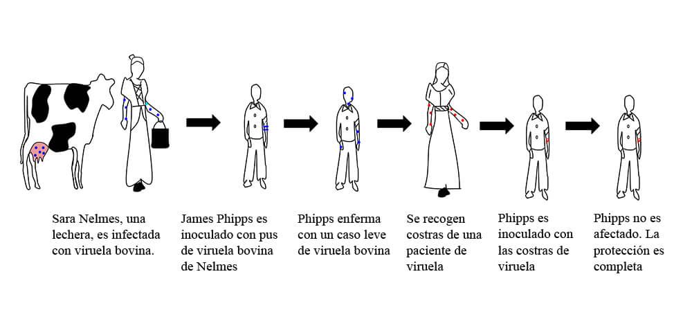 Experimento de Jenner para obtener la primera vacuna